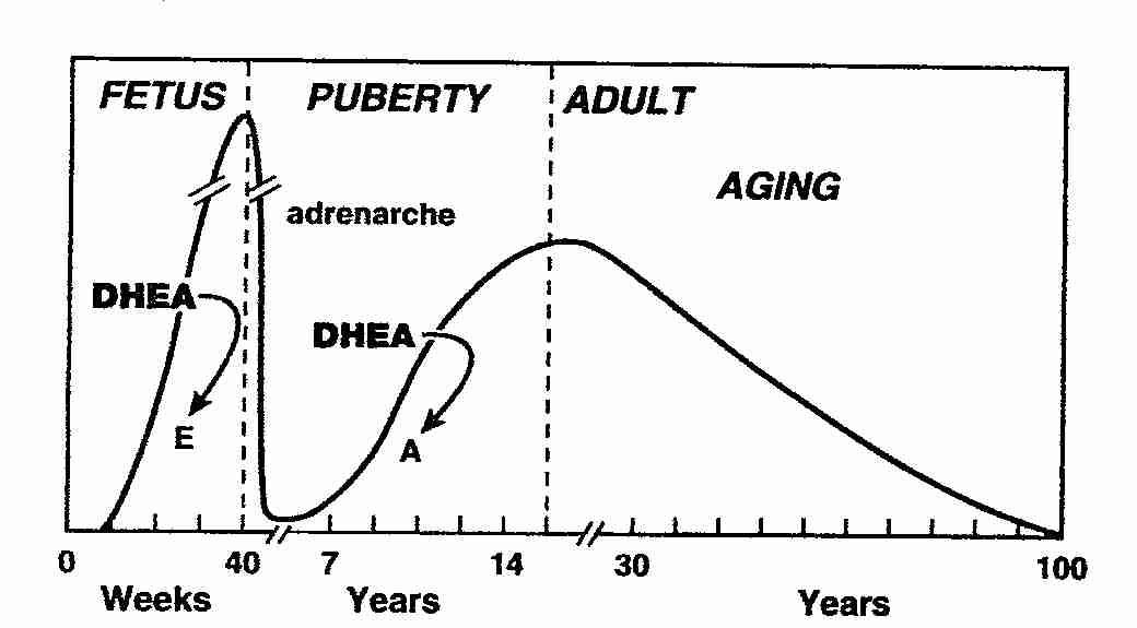 DHEA-ηλικία