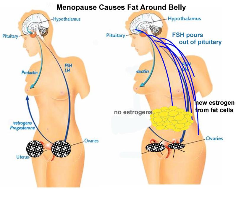 εμμηνόπαυση-αύξηση-λίπους-στην-κοιλιά