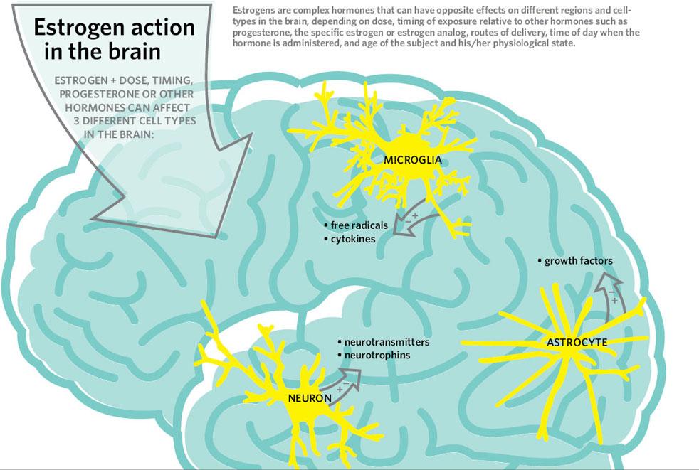 οιστρογονα ενεργειες στον εγκεφαλο
