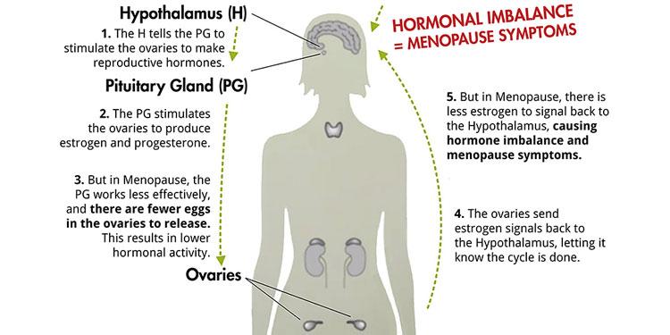 Ορμονική Πτώση – Εντροπία και Γήρανση